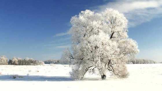 Winter Tree On A Cold Winter Day Free Website Background Image