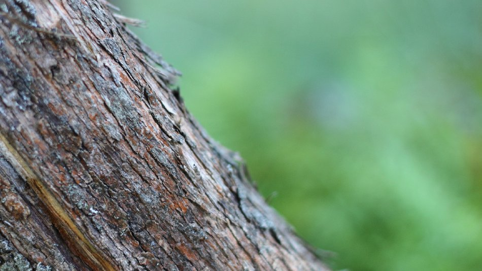 Bark On A Green Background Free Website Background Image