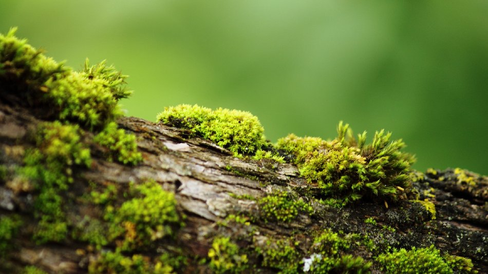 Bark With Moss Free Website Background Image